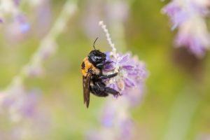 bee, sting, flower, Epsom salt