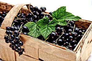 black currant, currant, berries, CP