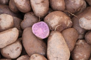 purple potato, potato, fibrocystic
