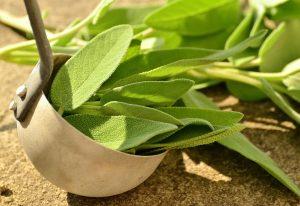 sage, herb, gum pain