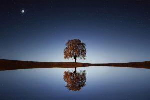 tree, night, focus, reflection, astigmatism