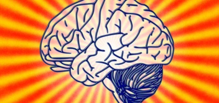 memory, brain, mind, honey