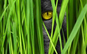 cat, cat grass