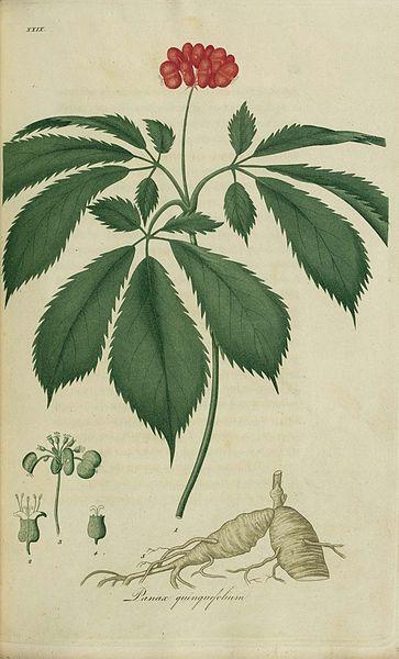 indian ginseng, ashwagandha health benefits