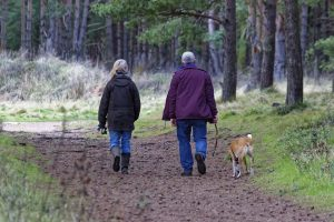 routine, walk, dog, prevent dementia