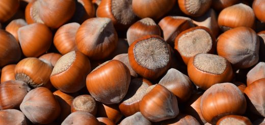 hazelnut health benefits, nut