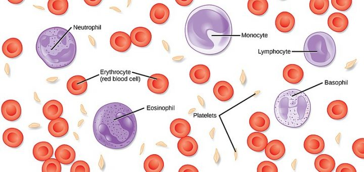 blood cells, platelets, blood